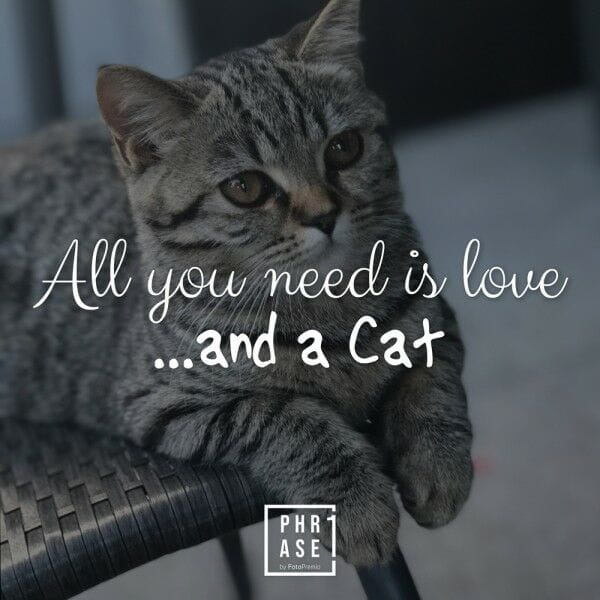 All you need is love …and a ...   T-Shirt
